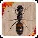 Download Ant Smasher 2.5 APK