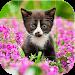Download Cute Animal Puzzle 1.12 APK