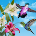 Download Birds Live Wallpaper 1.1.3 APK