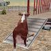 Download Farm Animals Transporter Truck 1.16 APK