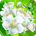 Download Flower Crush Match 3 1.5 APK