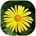 Download Gallery v_1.04 APK