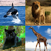 Download Guess The Animal 1.0.0 APK