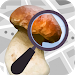 Download Mushroom Identify - Automatic picture recognition 2.35 APK