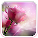 Download Pink Roses Live Wallpaper 5.0 APK