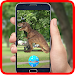 Download Pocket Dinosaur Go! 1.0 APK