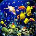 Download Sea Life Video Wallpapers 1.1 APK