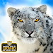 Download Snow Wild Leopard Attack Sim 1.0.1 APK
