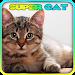 Download Super Cat 3D 2.1 APK